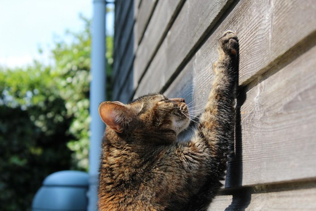 Cat Behavioral Problems