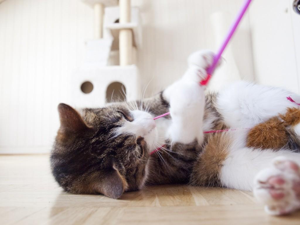 dealing with bad cat behavior