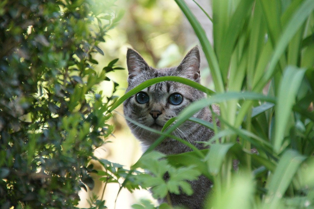 How To Keep Cats Out Of Garden Best Cat Wallpaper Collection 2017