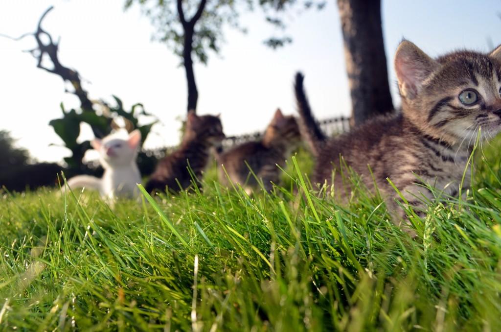 prevent fleas on cats