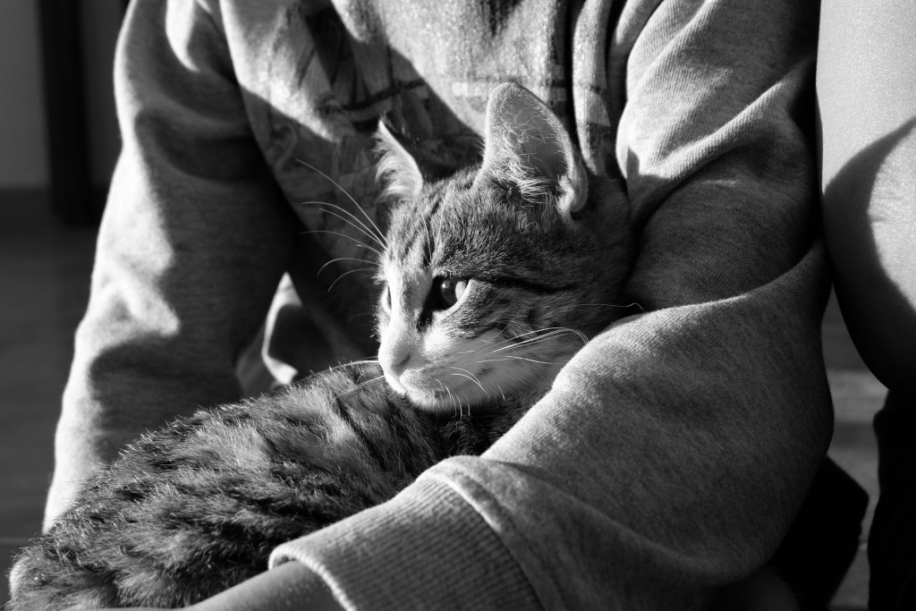 preventing tapeworms in cats