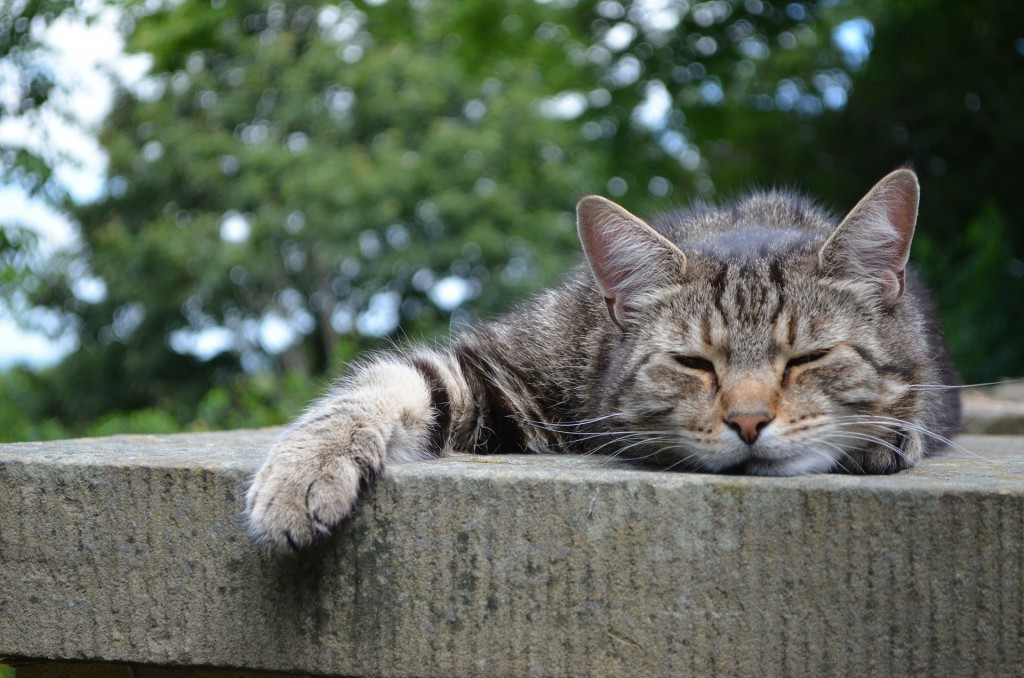 Putting a Cat to Sleep: Everything You Need to Know